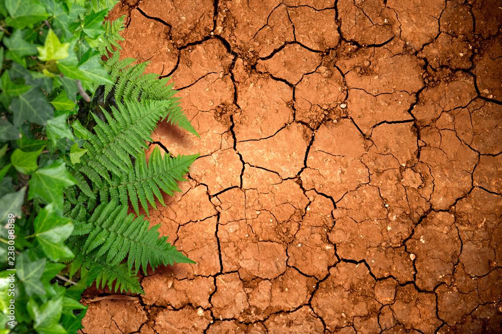 Fototapeta drought and greenery