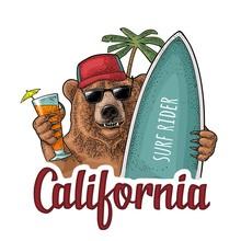 Bear Holding Surfboard And Cocktail. Vintage Black Engraving