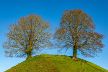 Two Trees On A Hillside With A...