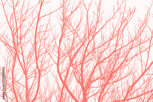 living-coral-abstract-background