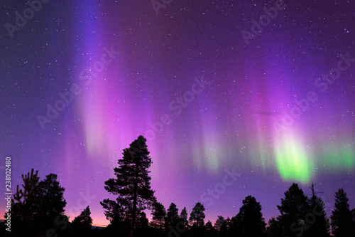 Papiers peints Aurore polaire Aurora Borealis, Northern Lights, above boreal forest.