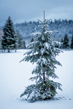 Charlie Brown Christmas Tree In Nature With Snow On The Ground In The Mountains