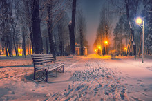Winter Evening In A Central Park.