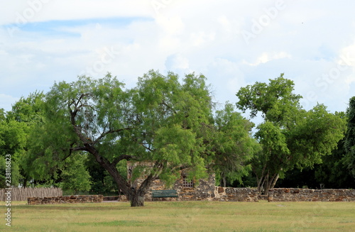 Fotografie, Obraz  Trees with the ruins on background in San Antonio Missions National Historical P