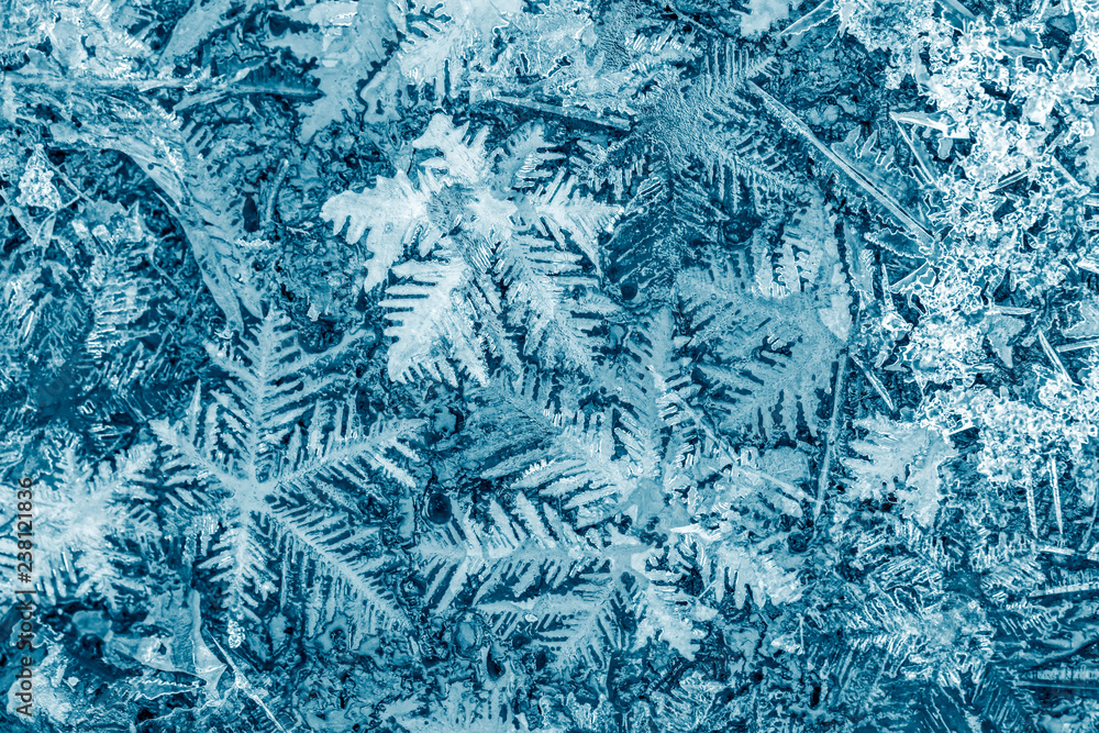 Fototapeta snowflakes crystals macro image. beautiful winter and christmas background