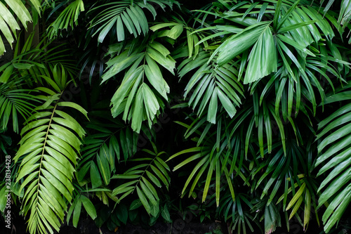 Obraz Tropical jungle nature green palm leaves on dark background in a garden - fototapety do salonu