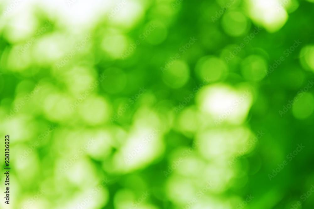 Soft green natural bokeh background.