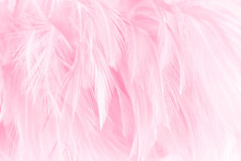 Soft Pink Feathers Texture Background.