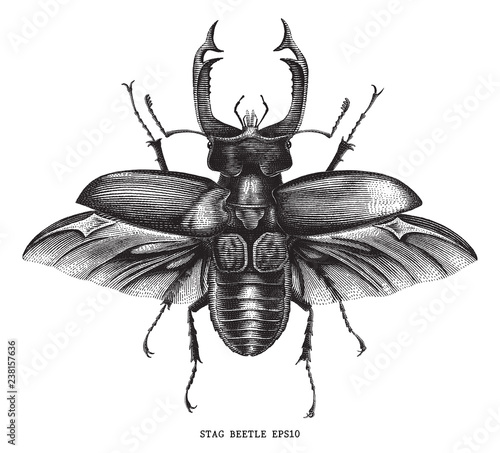 Photo Antique of insect stag beetle bug illustration engraving vintage style isolated