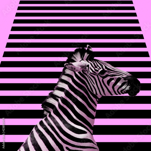 Minimal Contemporary collage art.  Zebra and zebra background. Fotobehang
