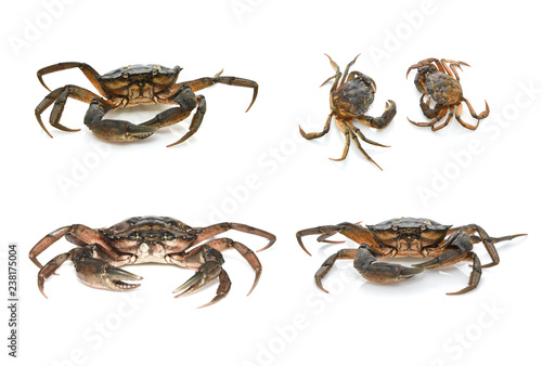 Crabs. Black sea crustaceans isolated on white background
