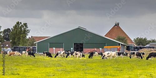 Tela Dairy farm barn on dutch countryside