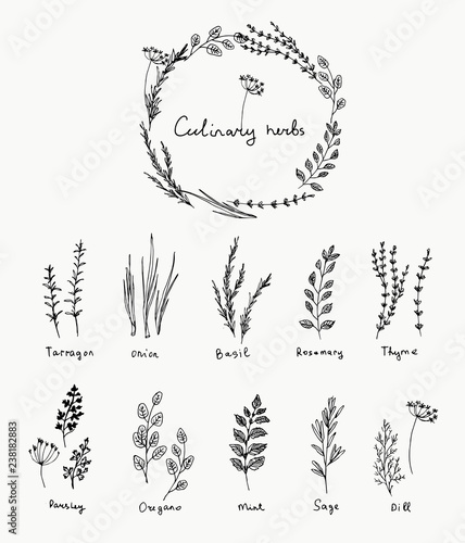 Fotografie, Obraz Hand drawn set of culinary herb