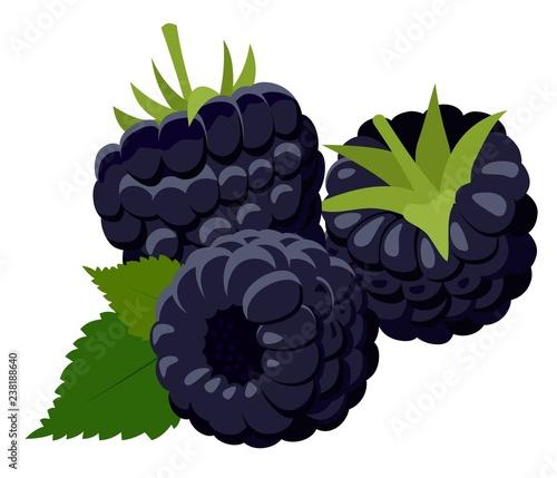 Fotografija  Blackberries