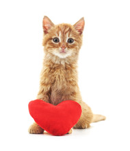 One Red Kitten With A Toy Heart.