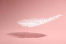 Feather On Pink Background