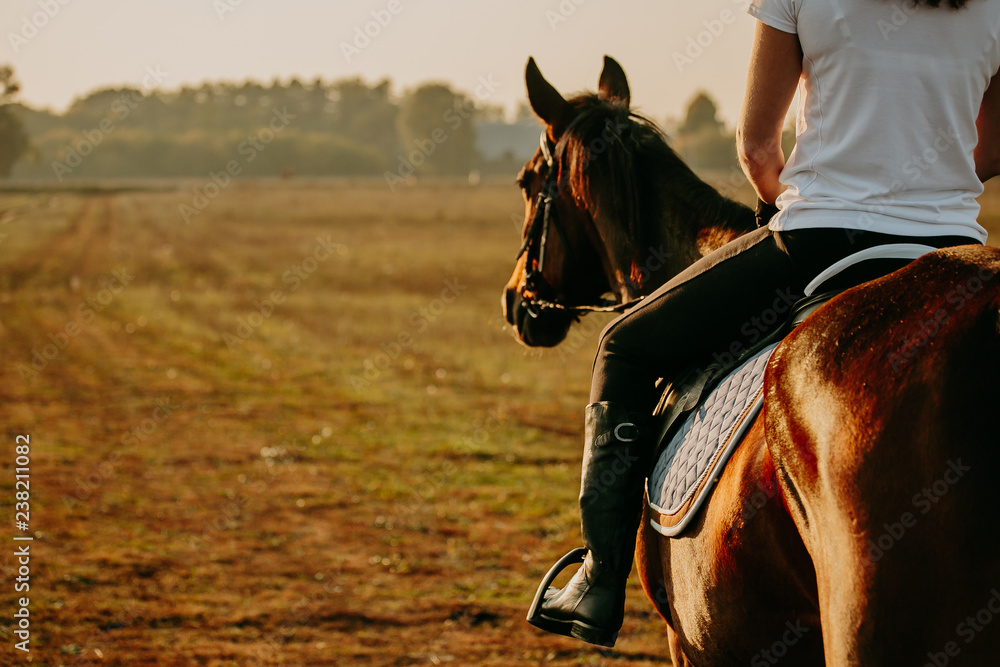 Fototapety, obrazy: Young woman horseriding in sunset on the fields. Close up