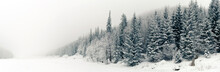 Winter White Forest Panorama W...