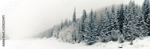 Carta da parati Winter white forest panorama with snow, Christmas background