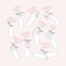 Woman Hand Set Holding A Flower. Feminine Illustration. Vector Illustration