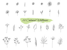 A Collection Of Handmade Sketches With Plants. Monochrome Image Of Wild Flowers And Herbs. Black And White Elements For Coloring. Illustration.