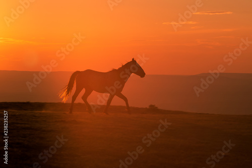 Wall Murals Cow Wild Horse Silhouetted at Sunset