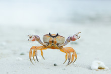 Small Crab Crawling On Stony Ground