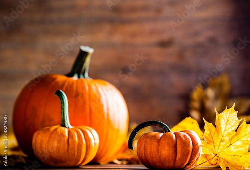 Fototapeta maple leaves and pumpkins on wooden table. Image in autumn Thanksgiving day style obraz