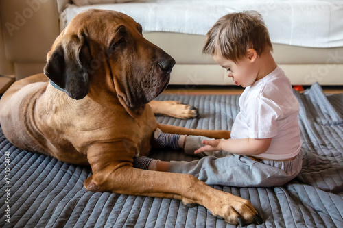 Photographie  Cute small boy with Down syndrome playing with big dog of Fila Brasileiro breed