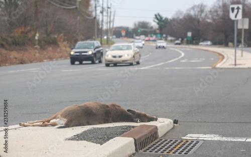 Fotografía dead dear on the asphalt road hit by a car.