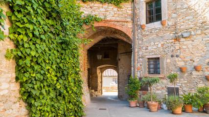 Fototapeta na wymiar Sassetta, Livorno, Tuscany, Italy - 25 June 2018. The ivy on the old antique wall close up