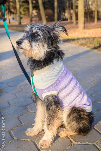 Foto  Portrait of mongrel dog in the park
