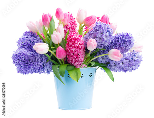Fotografía Bunch of hyacinth blue and pink fresh flowers in blue pot isolated on white back