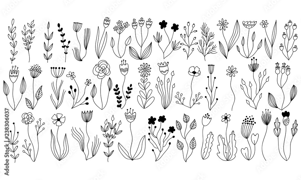 Fototapety, obrazy: vector botanical collection of floral and herbal elements. isolated vector plants, branches and flowers in ink sketch design. hand drawn botanical doodle set for cards, invitations, logo, diy projects