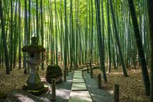 鎌倉 報国寺 竹の庭
