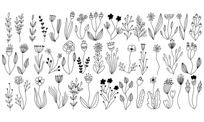 vector botanical collection of floral and herbal elements. isolated vector plants, branches and flowers in ink sketch design. hand drawn botanical doodle set for cards, invitations, logo, diy projects