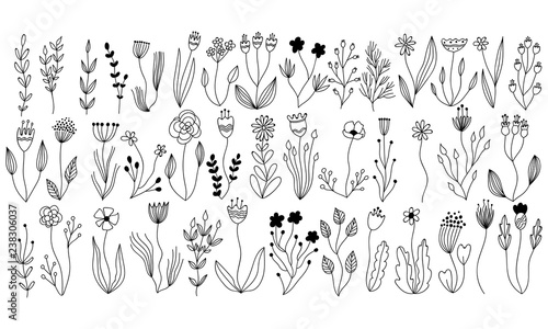 vector botanical collection of floral and herbal elements. isolated vector plants, branches and flowers in ink sketch design. hand drawn botanical doodle set for cards, invitations, logo, diy projects - 238306037