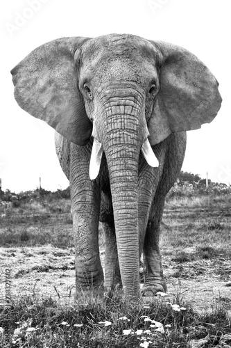 Foto op Aluminium Olifant Elephant, elefant