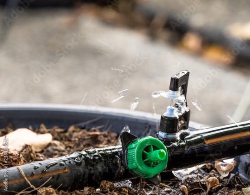 Obraz Closeup Sprinkler watering tree on flowerpot. - fototapety do salonu