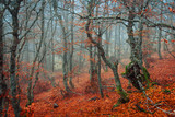 Fototapeta Forest - Thin trees in magnificent autumn forest