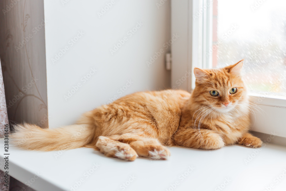 Cute ginger cat siting on window sill and waiting for something. Fluffy snowfall behind window glass.