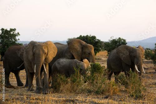 Foto op Plexiglas Afrika herd of elephants