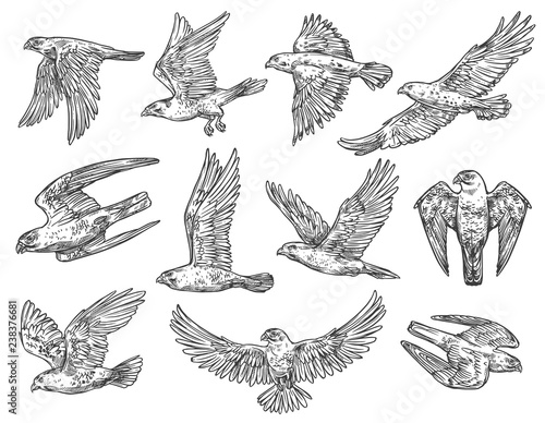 Birds of prey sketches. Eagle, falcon and hawk фототапет