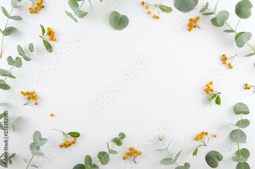 Spring flowers composition. Rectangular frame made of yellow rowan berries and gree eucalyptus branches on white background. Flat lay, top view, copy space.