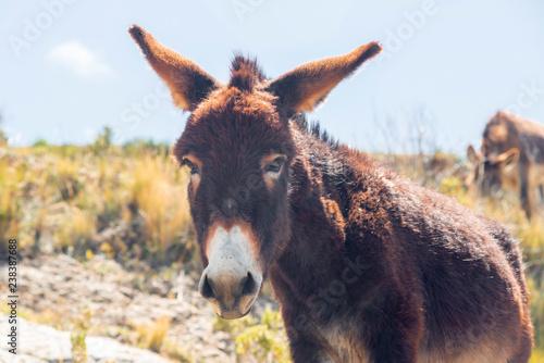 donkey by sunny day