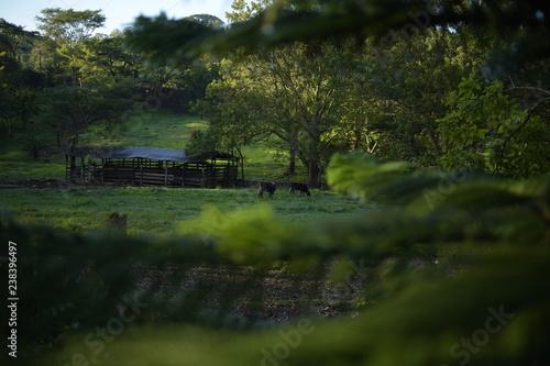 Poster Nature Landscape Nicaragua