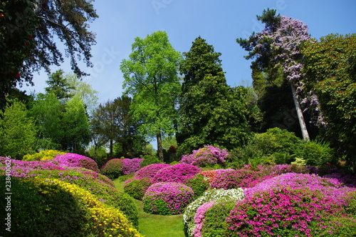 Azalea Walk, Gardens of the Villa Carlotta, Lake Como (Lago di Como), Italy