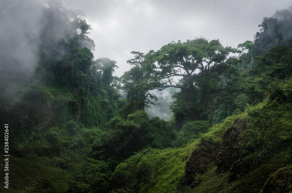 Fototapeta Foggy overgrown hills in rainforest of Cameroon, Africa.