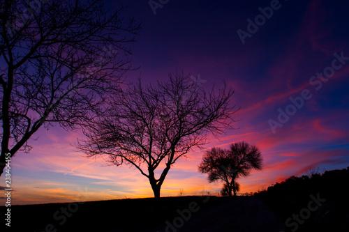 Fotografía  Anoche entre árboles  con el cielo rosa y amarillo