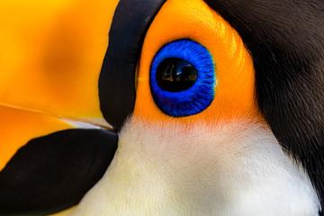 zbliżenie oka tucano